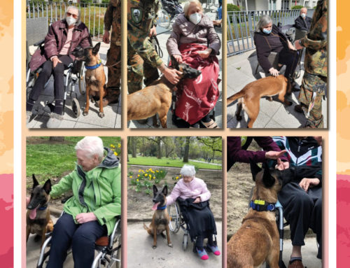 Besuch von Therapiehund Shira im Comunita Seniorenhaus Josefa in Dortmund